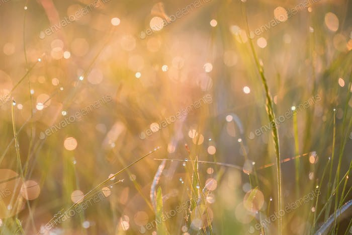 Beautiful background with morning dew on grass close