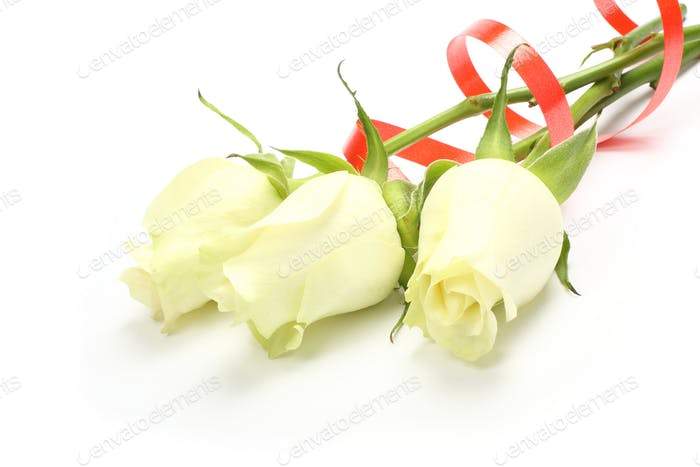 Bouquet of white roses  on white background