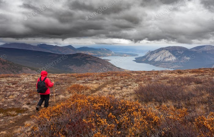 Hiking rainy autumn fall boreal alpine tundra path