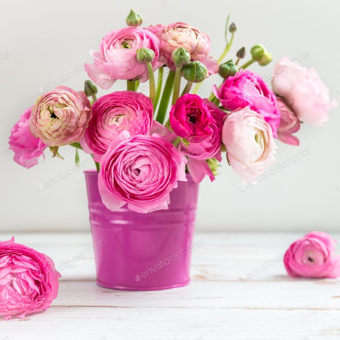 Pink Ranunculus Buttercup Flowers in Pink Pot on Light Backgroun
