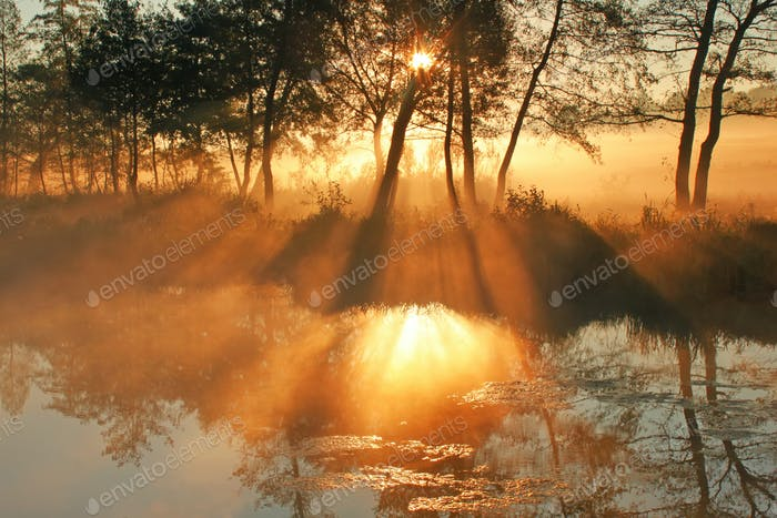 Dawn sun rays pass through the mist