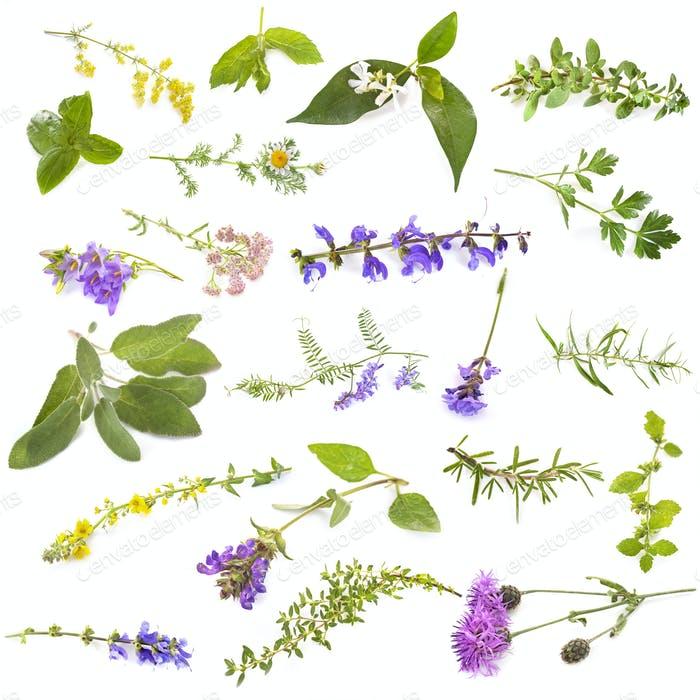 Thumbnail for group of wild plants