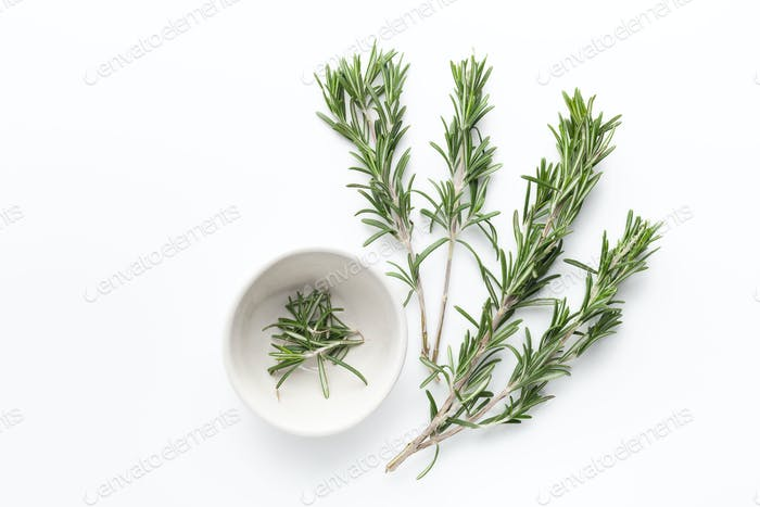 Fresh green sprigs of rosemary on white