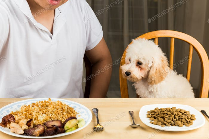 Puppy eyeing the plate of rice and meat on a teenager's plate