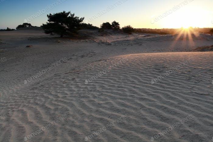 Sonnenschein über Sanddüne