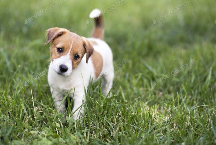 Pet training concept - cute happy puppy dog