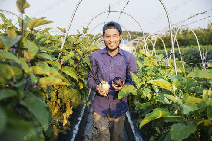 Japanese man wearing cap standing in vegetable field, holding aubergines, smiling at camera.