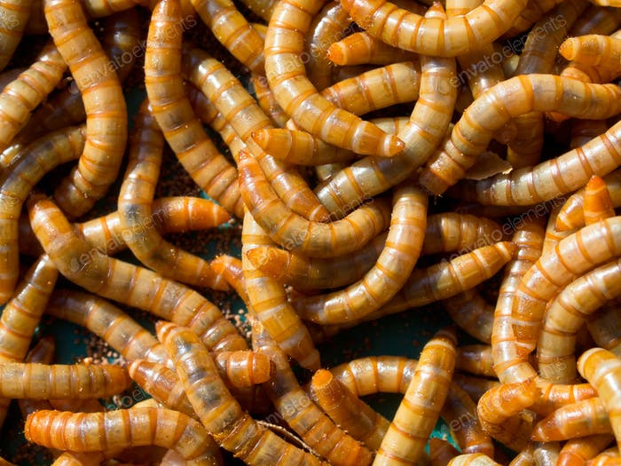 Mealworm abstract close up