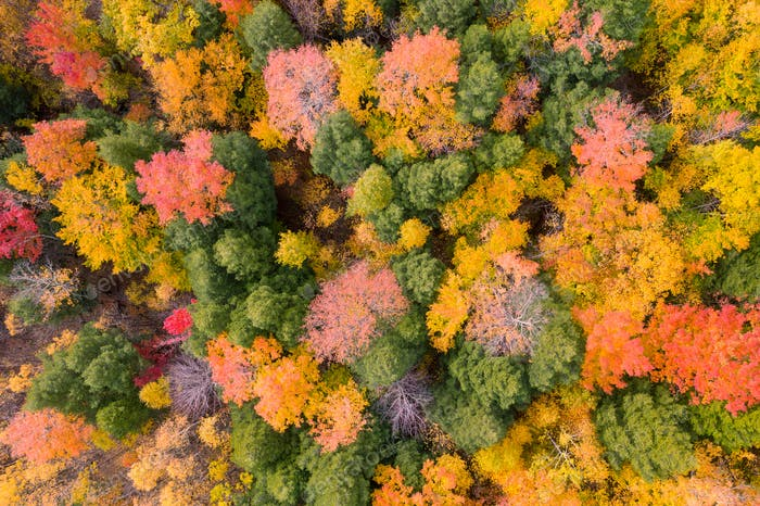 Aerial view of Forest in Autumn with Fall Colors in New England