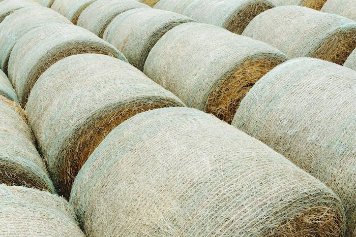 Envuelto balas de heno redondas en filas ordenadas en la pradera de Montana.