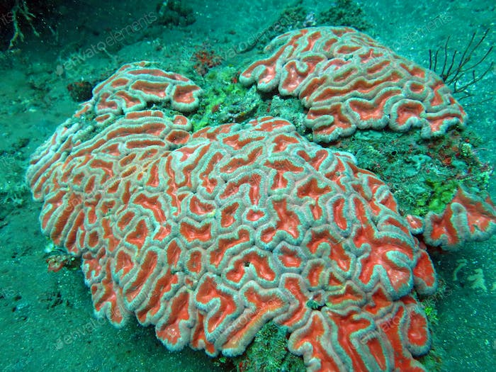 Thriving  coral reef alive with marine life and shoals of fish,
