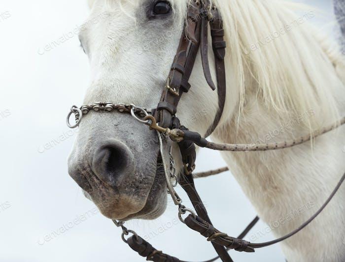 bit and camargue horse