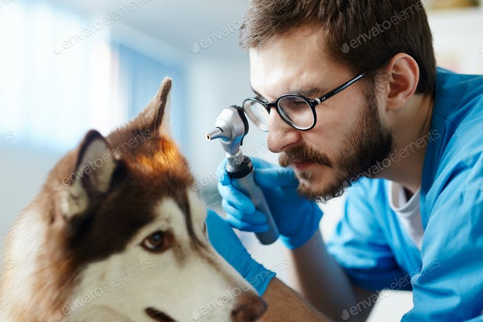 Ear check-up