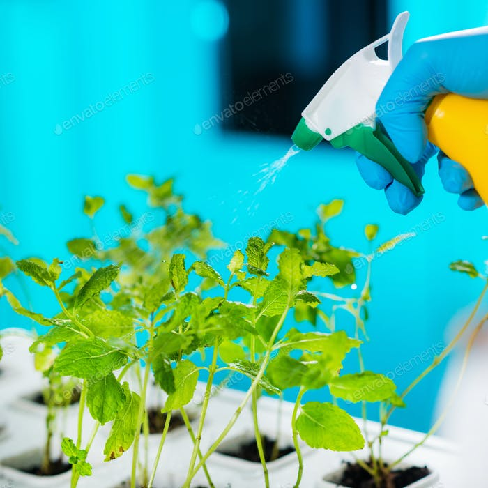 Lab Technician Spraying Plants