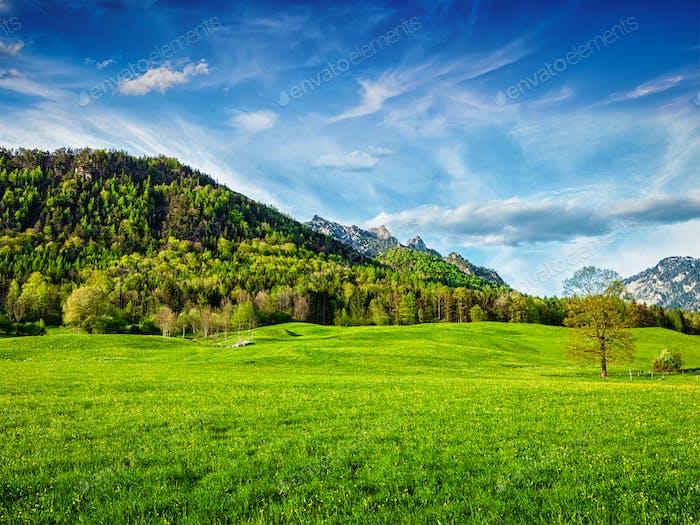 Alpine meadow in Bavaria,  German