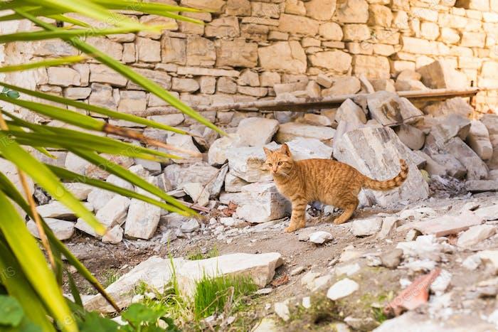 entzückend miauen roten Kätzchen im freien