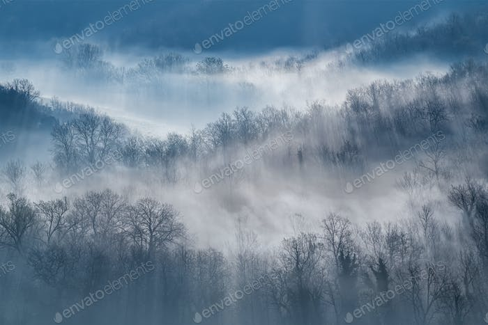 Morning fog above forest in Tuscany