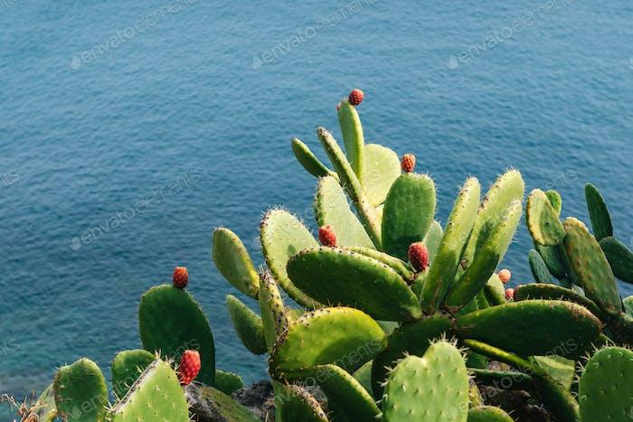 Mature couple Barbed cactus
