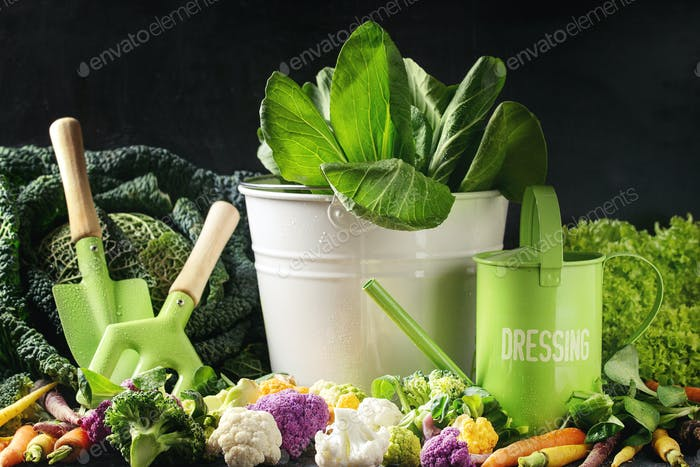 Green salads, cabbage, colorful veggies