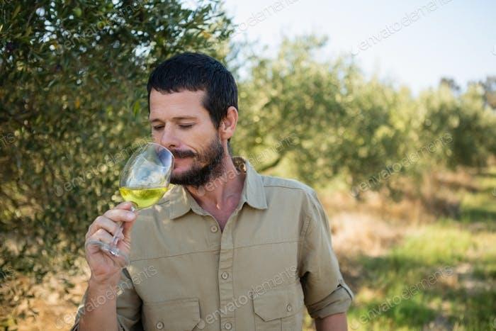 Farmer drinking glass of wine in olives factory
