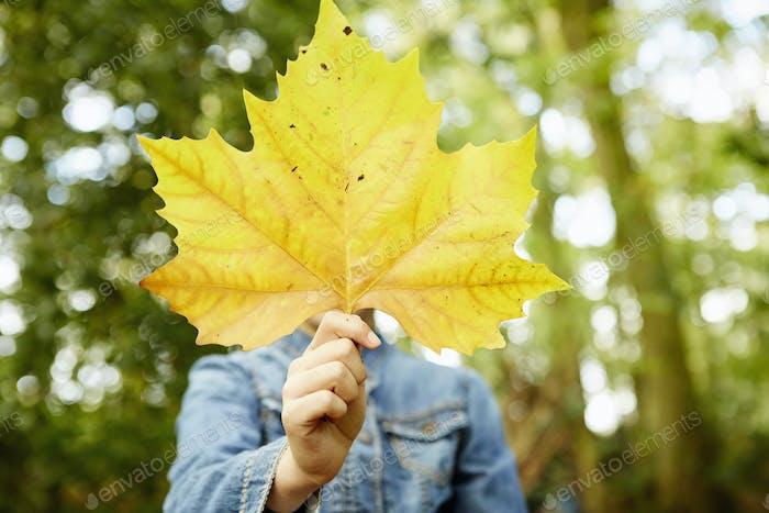 Ein junges Mädchen, das ein Herbstblatt vor ihrem Gesicht hält.