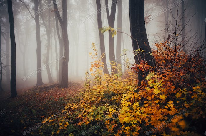 Enchanted autumn forest with colorful leaves