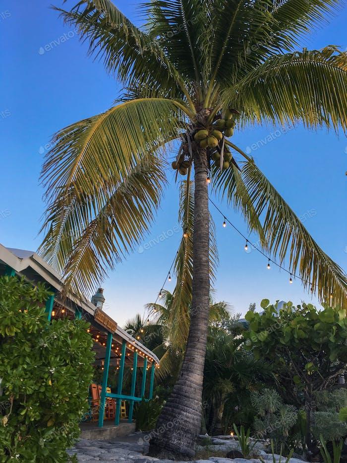 Sweet coconut tree on tropical island