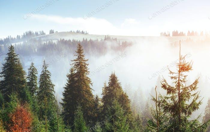 Sonnenlicht im grünen Wald am frühen Morgen