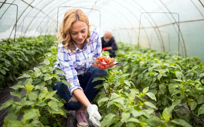 Happy woman farmer growing vegetables at farm
