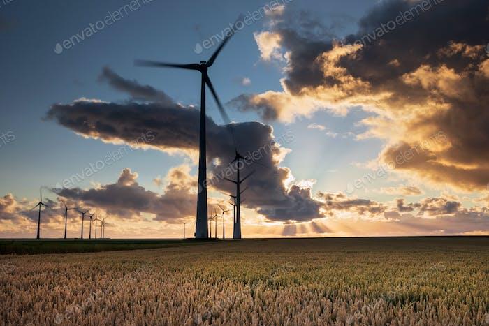 красивое закатное небо над турбинами и пшеничное небо