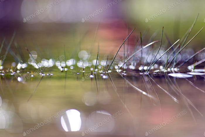 Grass with shiny droplets of water