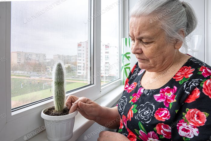 An elderly woman is caring for a cactus.