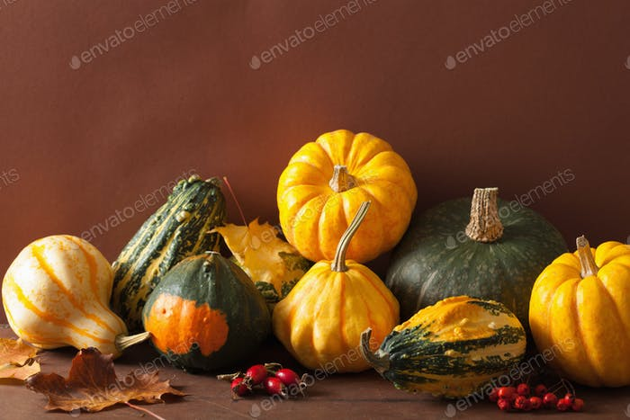 decorative mini pumpkins and autumn leaves for halloween