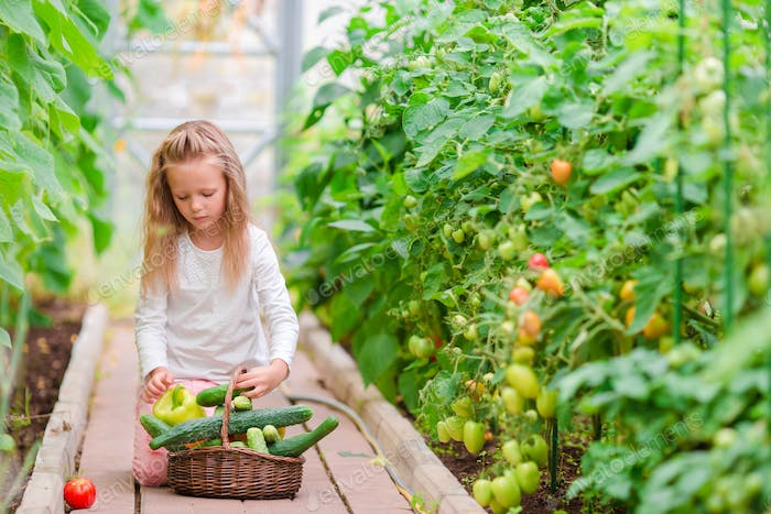 Little girl in greenhouse with basket full of harvest. Time to harvest. Big basket full of
