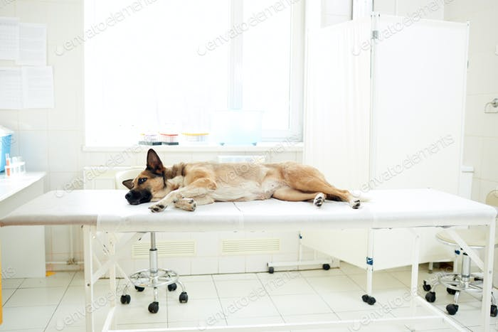 Sick animal