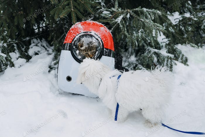 Cat in Pet Carrier Backpack in winter park, forest. Bubble Backpack Carrier for Cats, Airline