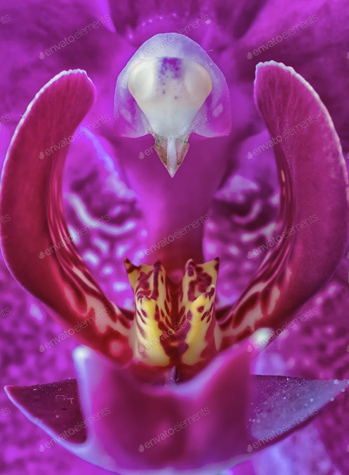 violette Orchidee Blume