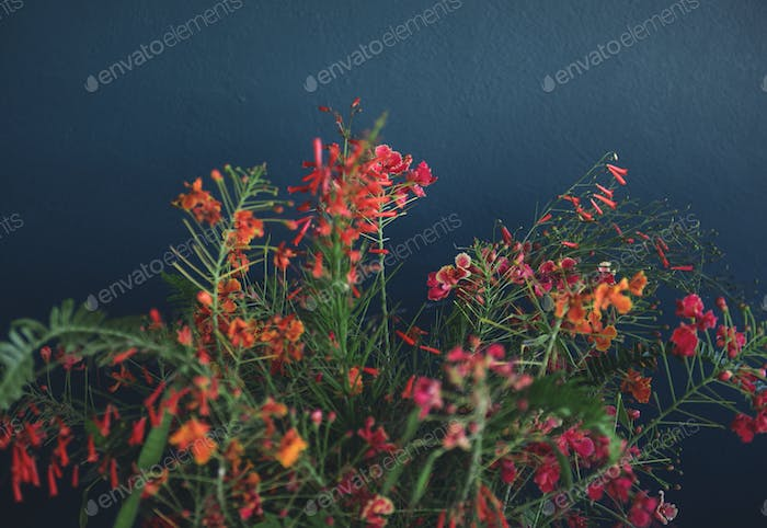 Wild flowers by the wall