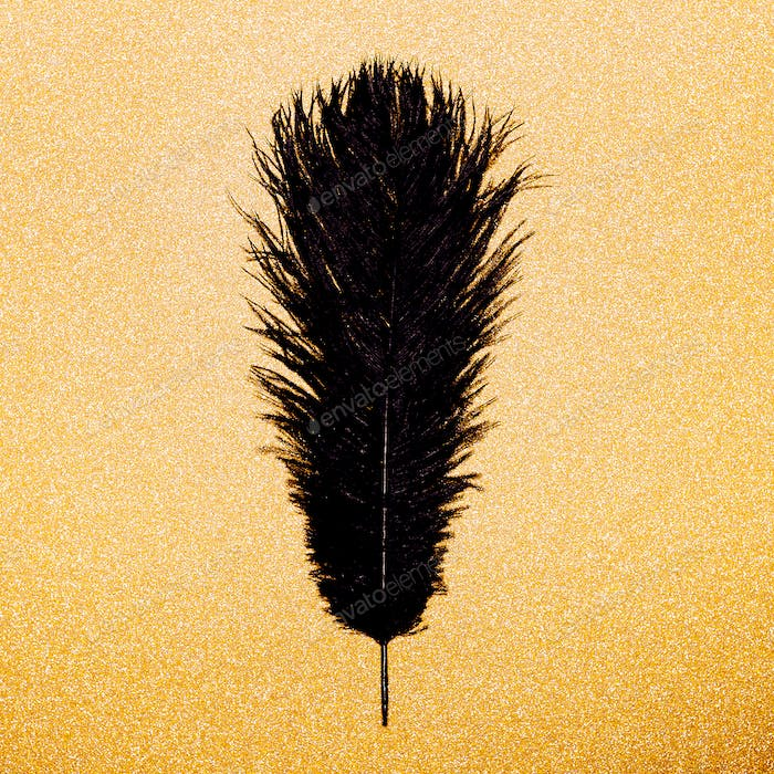 Black feather on a gold background. Minimal object