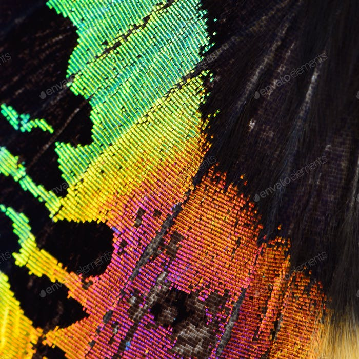 multicolored butterfly wing