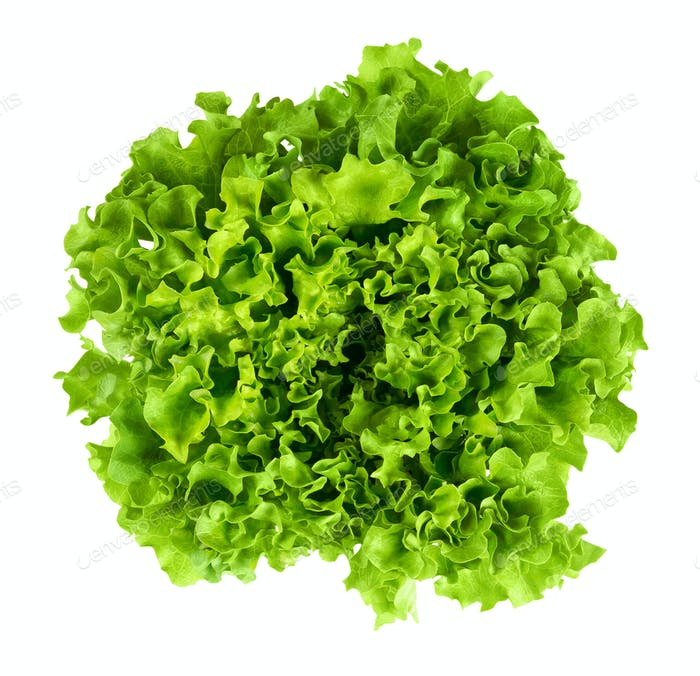 Batavia head of lettuce from above on white background