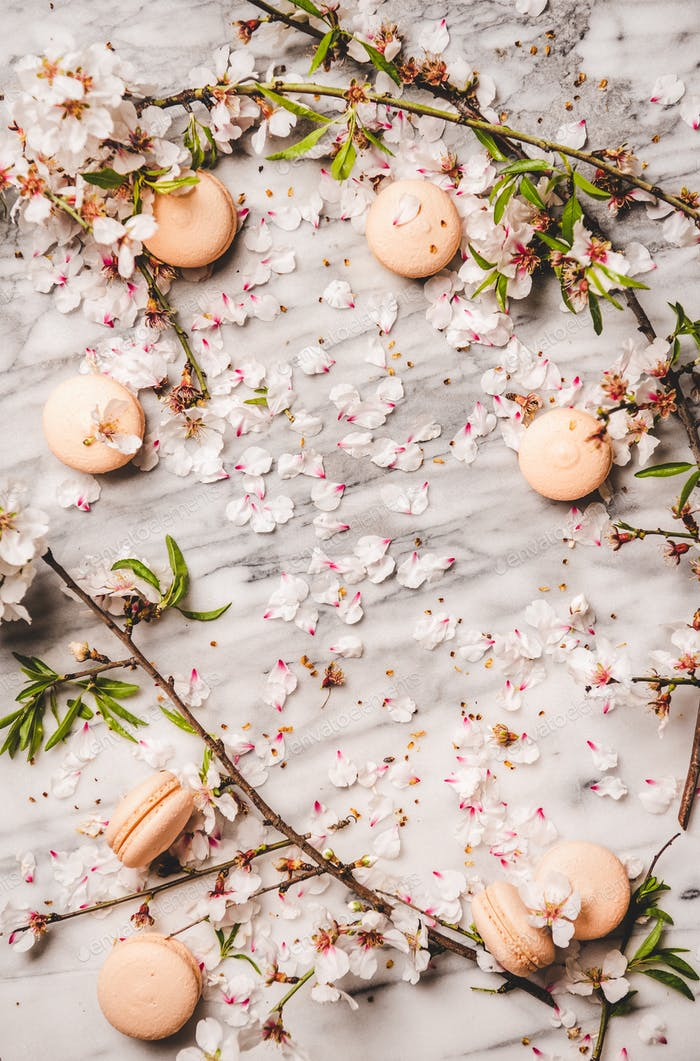 Sweet macaron cookies and white spring blossom flowers, copy space