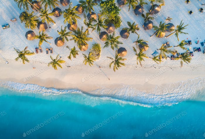 Aerial view of palms on the sandy beach of Indian Ocean at sunset