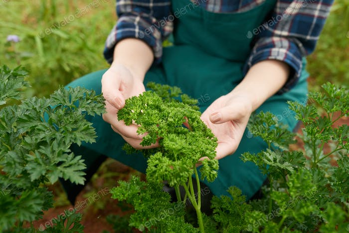 Growing greens
