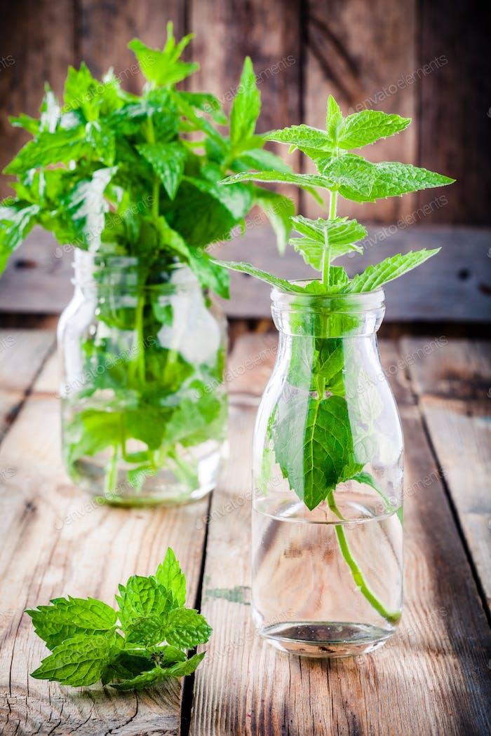 fresh organic mint in glass