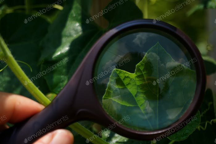 Look into nature through a magnifying glass