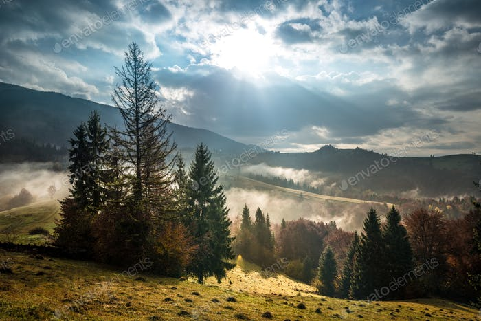 Mountain forest under beautiful cloudy sky on background