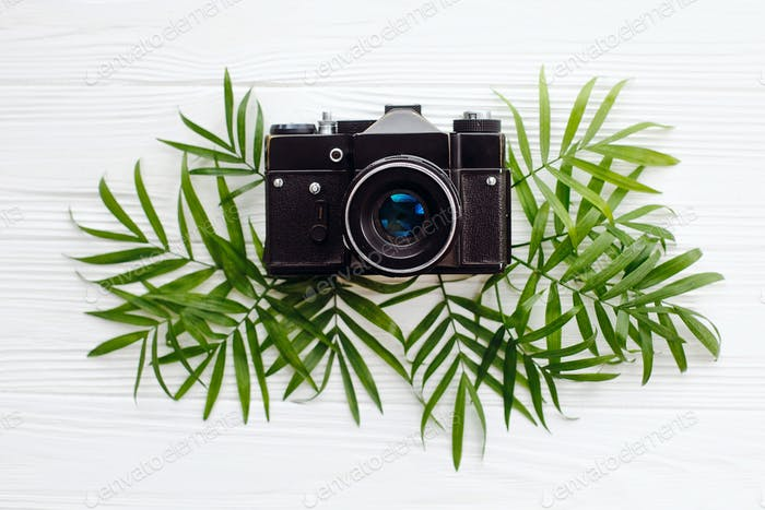 Stylish black old photo camera on green palm leaves
