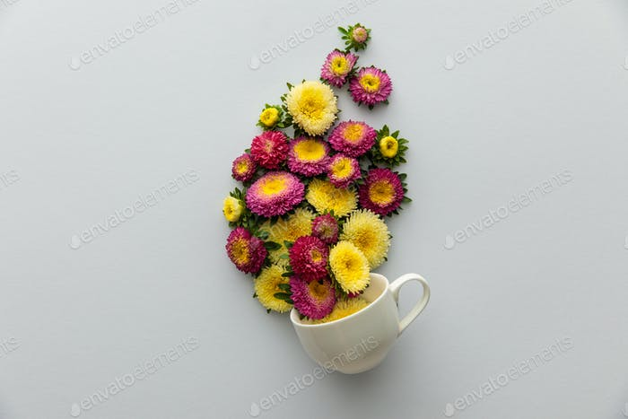 top view of asters in cup on white background