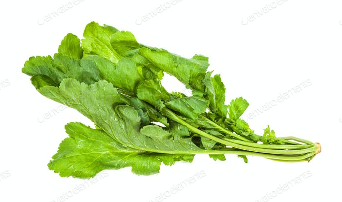 twig of fresh caucasian garden cress (tsitsmati)